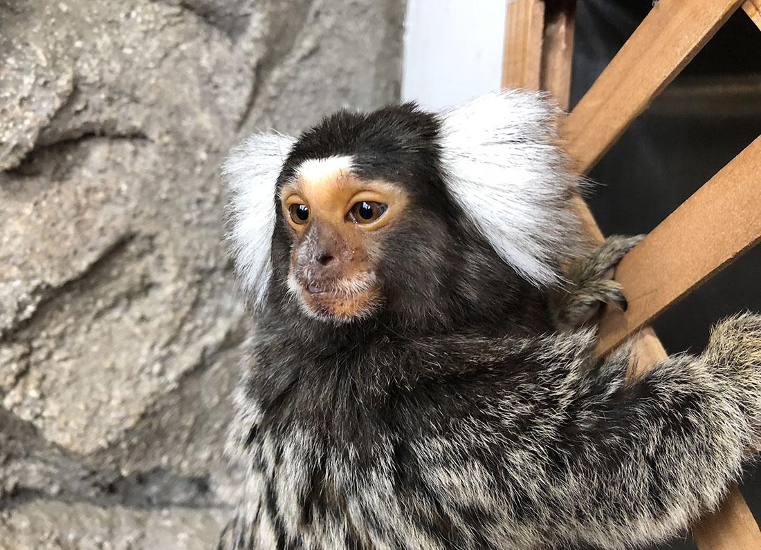 イケメンお猿に会いに、足羽山公園遊園地へ!