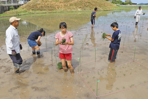 文字をかたどるテープの内側に苗を植えていく児童たち 若狭町天徳寺で