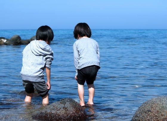 【6/9開催】早めに自由研究!海藻採集と標本作り