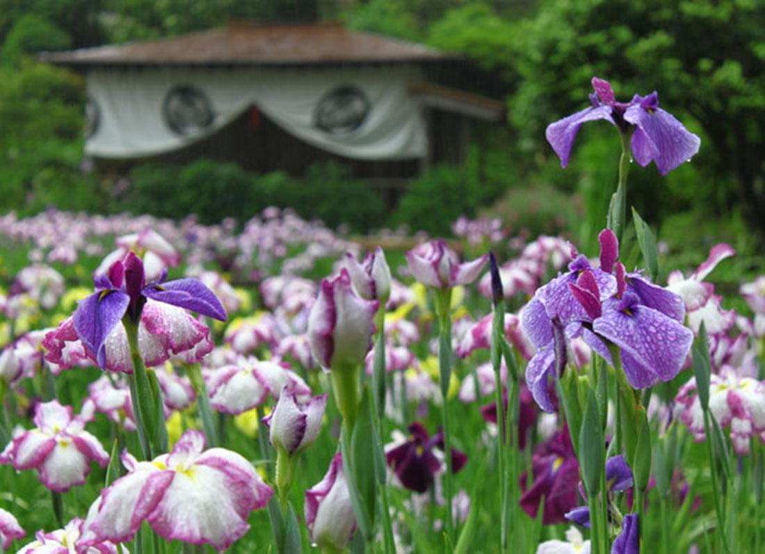 【6/8~23開催】初夏の花々に癒しを求めて。