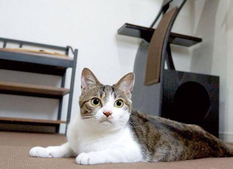 【6/22開催】カワユスぎてヤバい!猫まっしぐらの週末。
