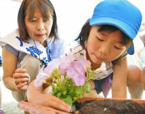 人権擁護委員の手ほどきを受けながら丁寧に花苗を植える園児 あわら市の金津こども園で
