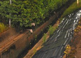 【地域】ホタル飛び交う春江 農業水路 3年ほど前から姿