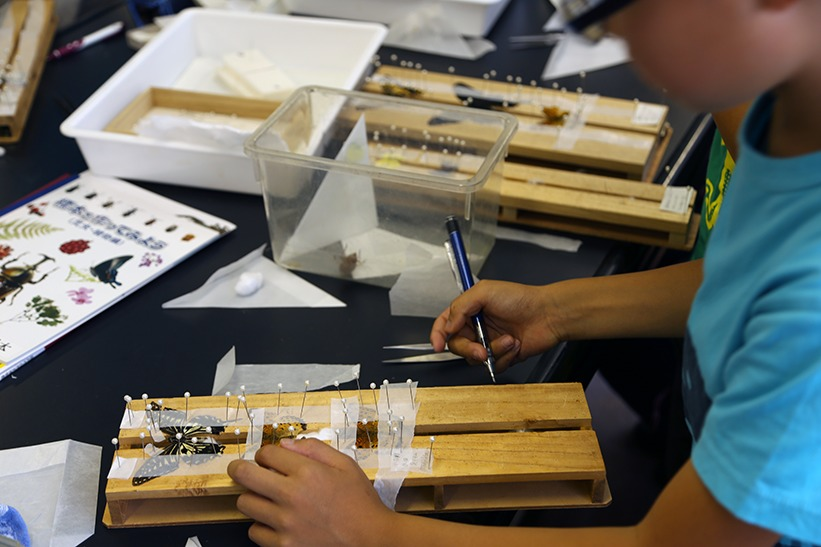 自然史講座「昆虫標本の作り方教室」