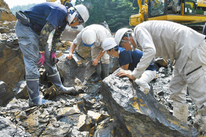 岩石から恐竜化石を探すスタッフら=勝山市の恐竜化石発掘現場で