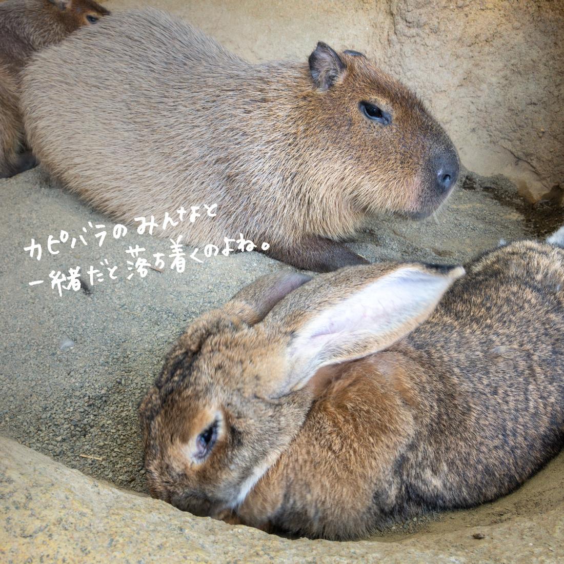 ウサギのマリーちゃん