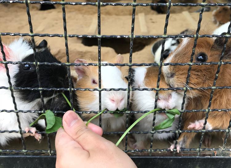 I♡あにまる。カワユ過ぎる動物たちにエサやりを体験してお話しできるツアー。