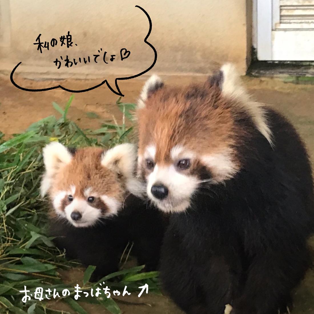 『鯖江市西山動物園』