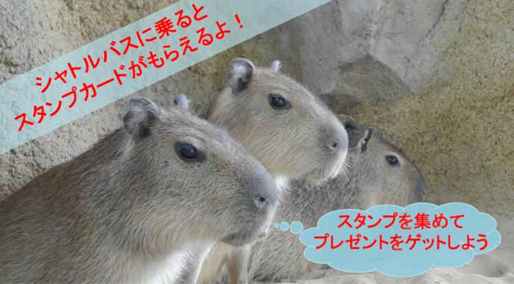 エサやりツアー ~様々な動物たちにエサをあげてみよう!~