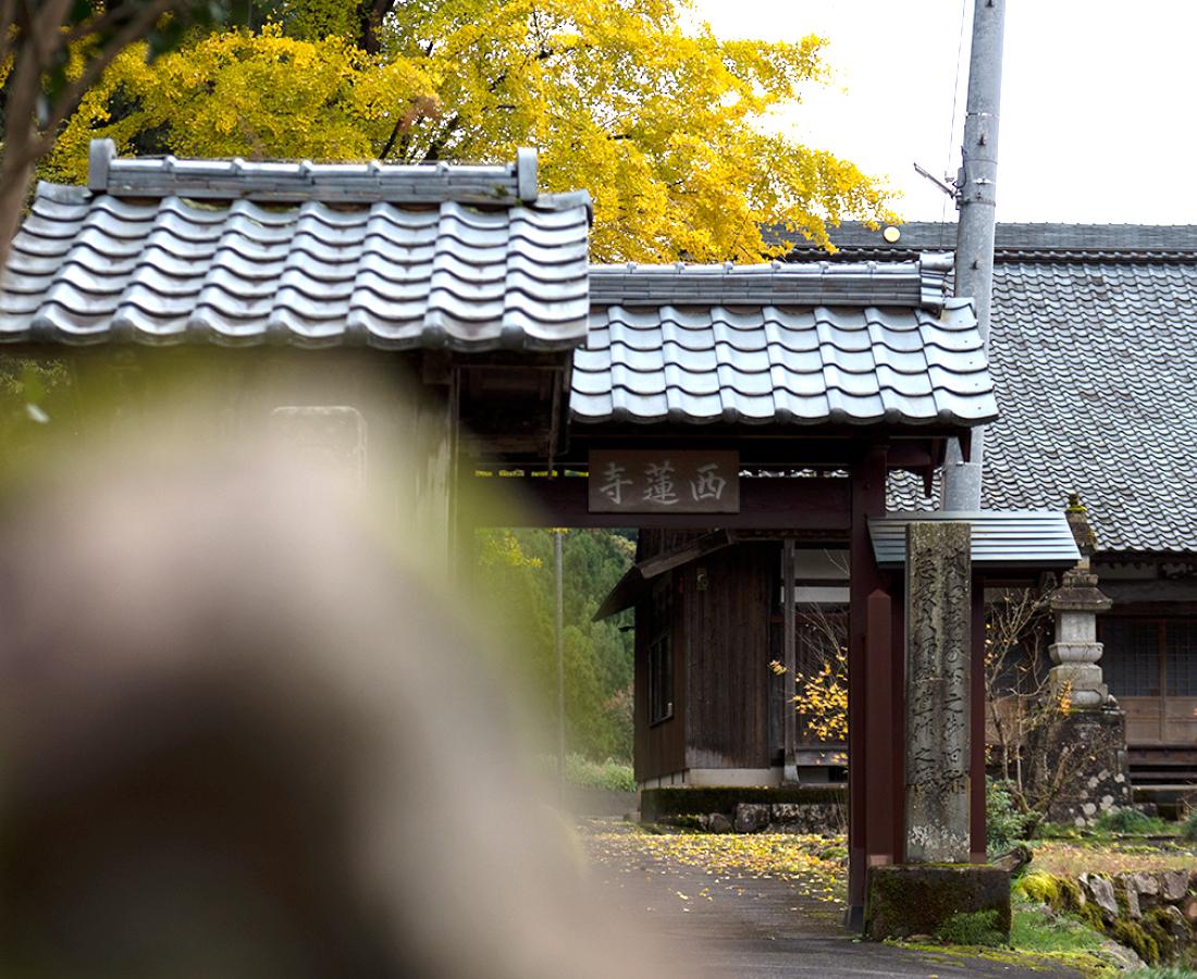 福井市『西蓮寺』明智光秀が戦禍から守った地区に残る安堵状とは