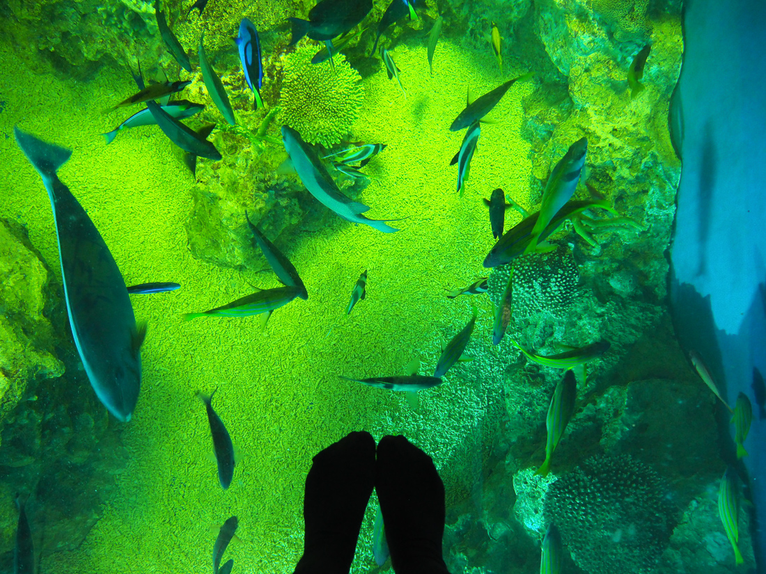 越前松島水族館 サンゴの海