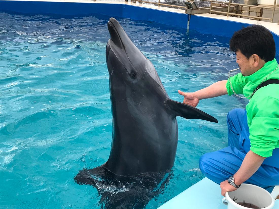 越前松島水族館 イルカ