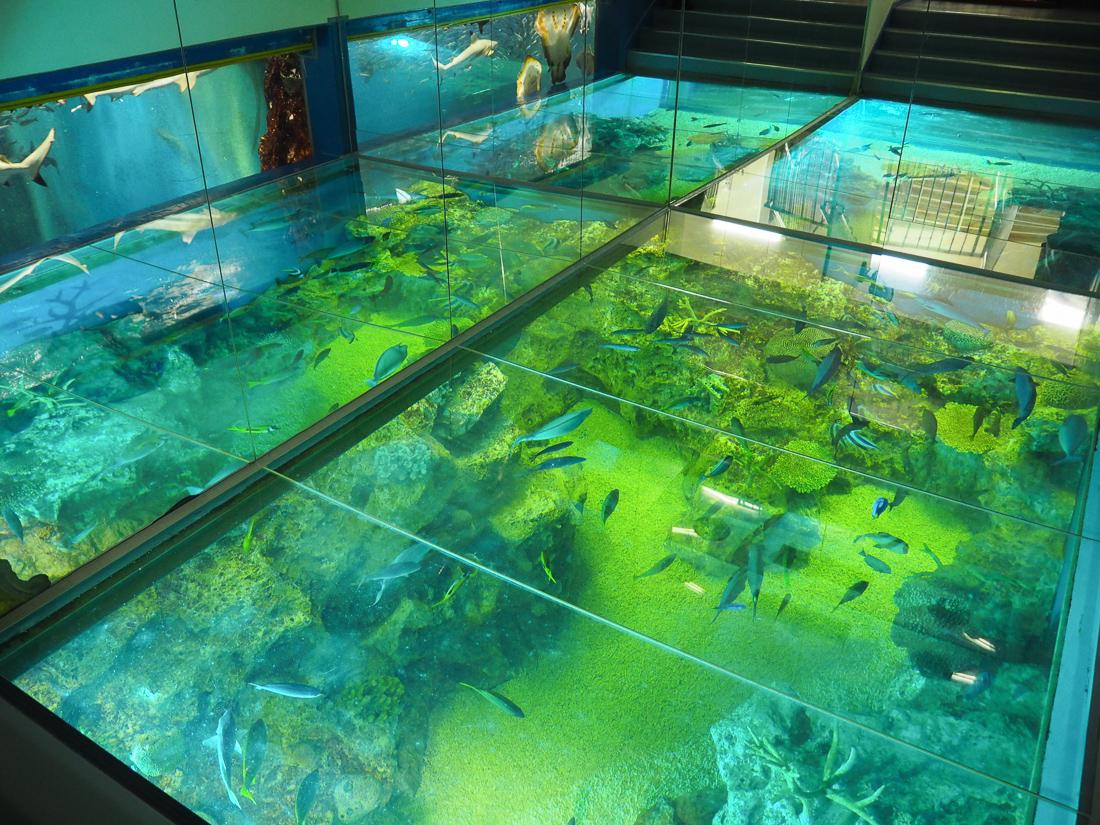 越前松島水族館 さんごの海
