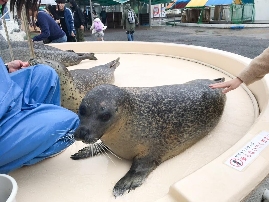 越前松島水族館 アザラシ