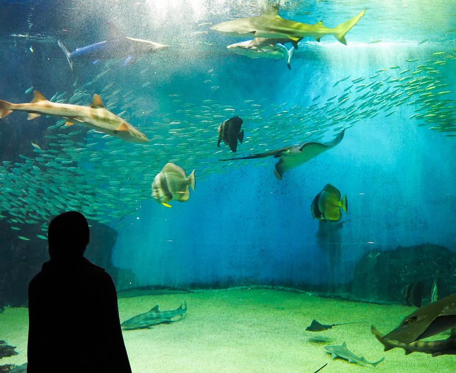 """越前松島水族館の裏側へ行けちゃう!""""近すぎる生き物""""と触れ合おう♪"""