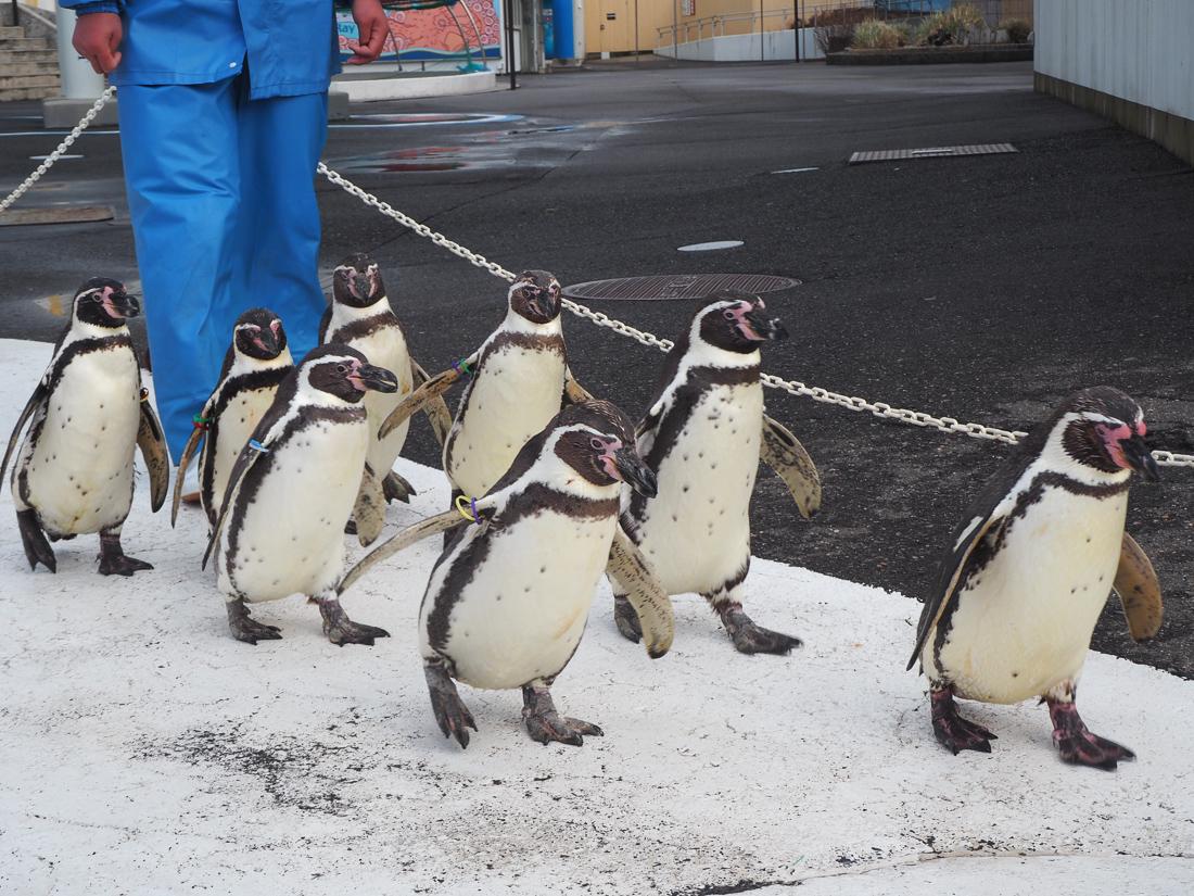 越前松島水族館 ペンギン