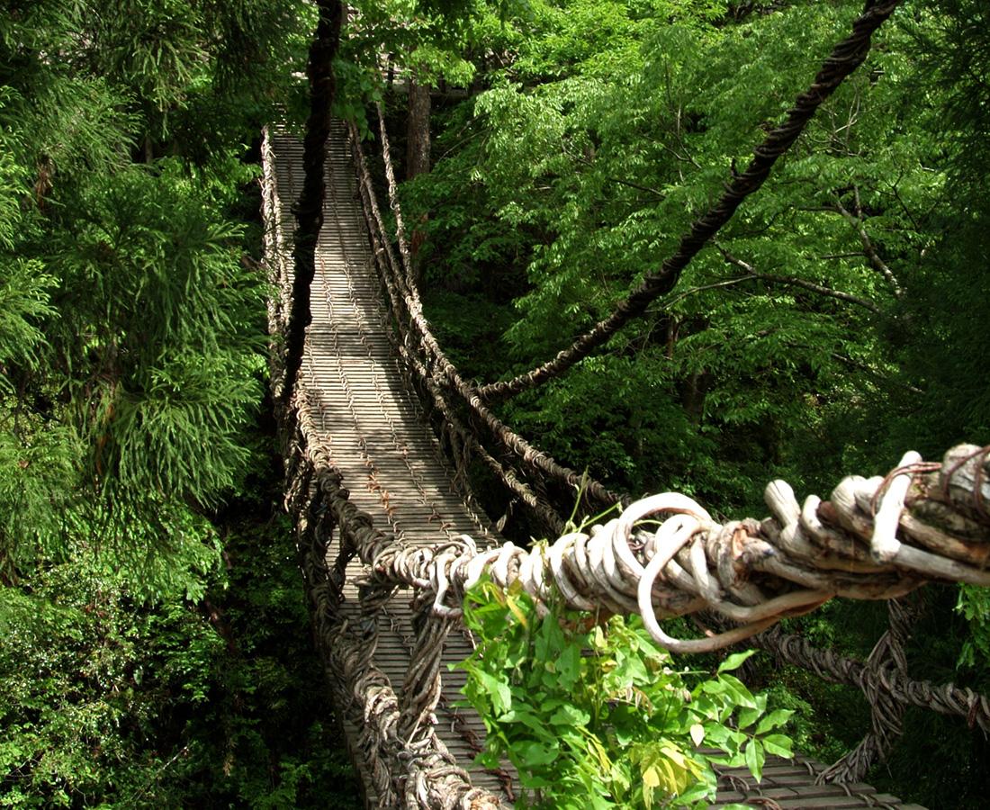 池田町の大自然の中で揺れる吊り橋でドキドキ!│かずら橋