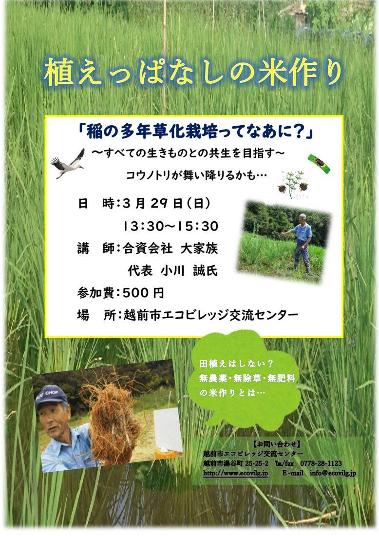 里山スクール 「植えっぱなしの米作り」