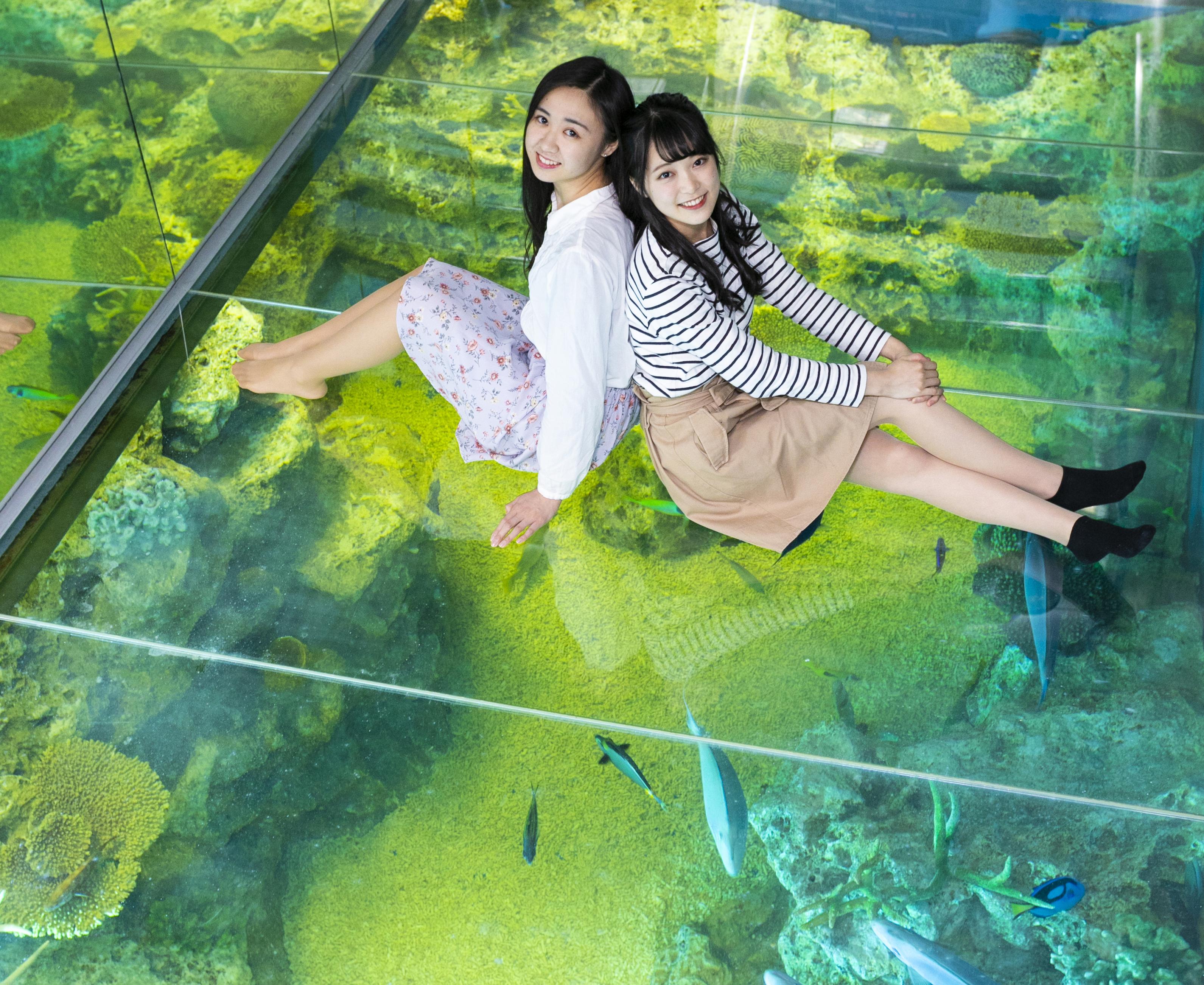 『越前松島水族館』の魅力を再発見しよう♪ URALA読者限定500円OFFクーポン配信中!