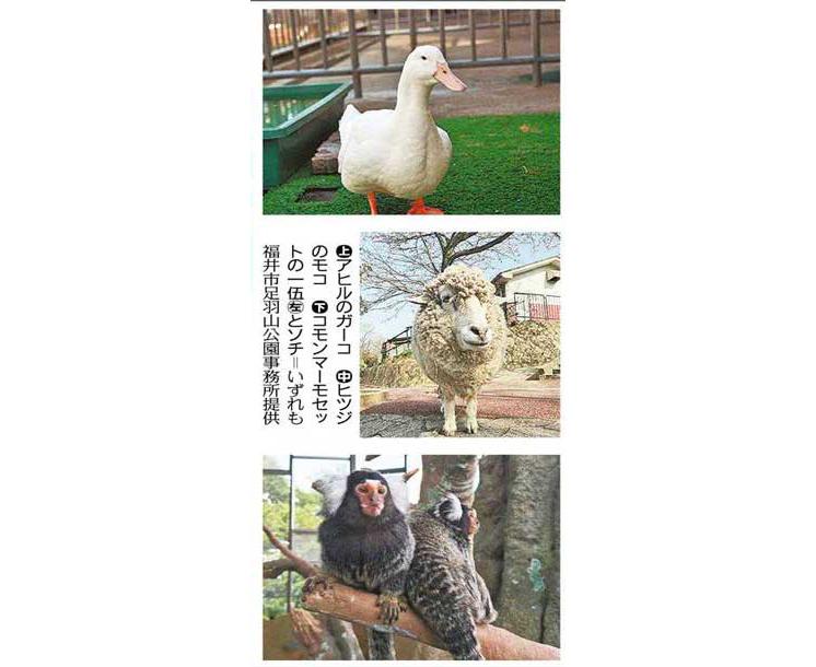 足羽山公園遊園地 寄付募る アヒル、ヒツジに仲間を