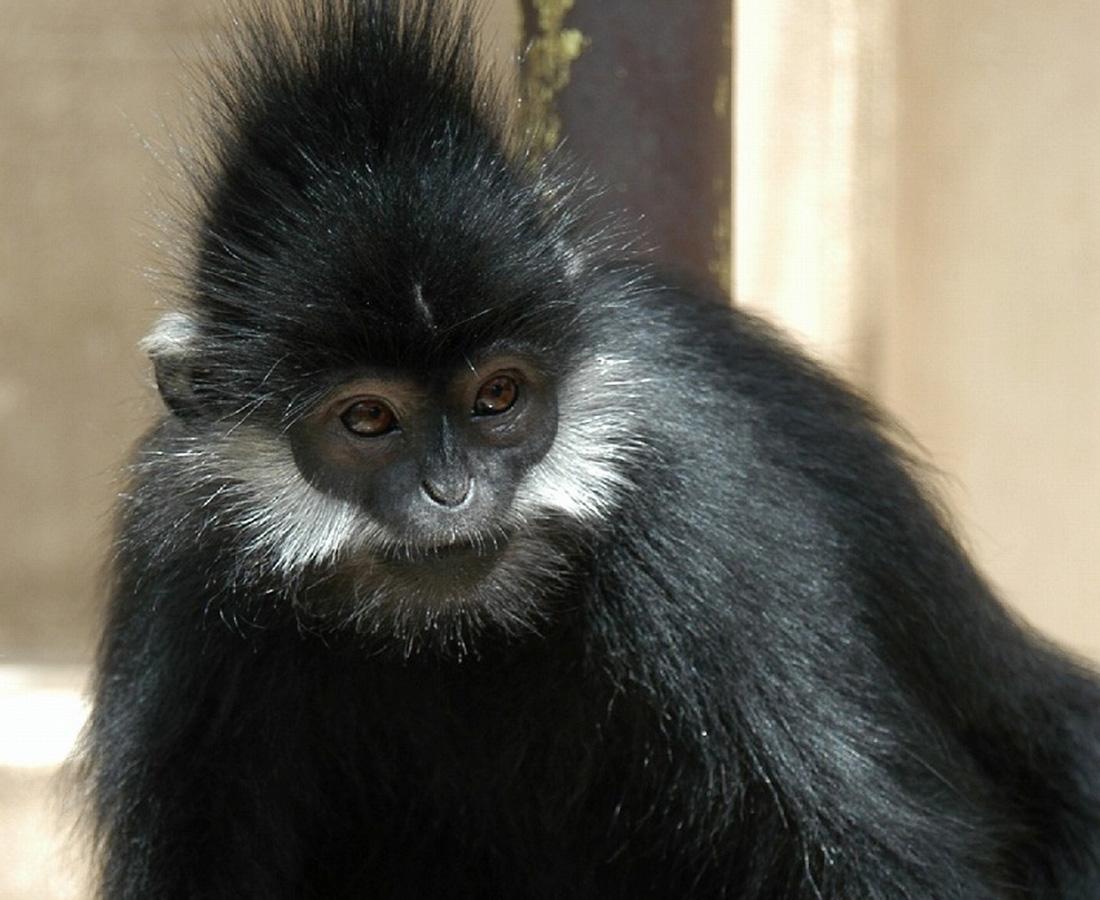 鯖江市西山動物園で忍者発見!? フランソワルトンファミリー
