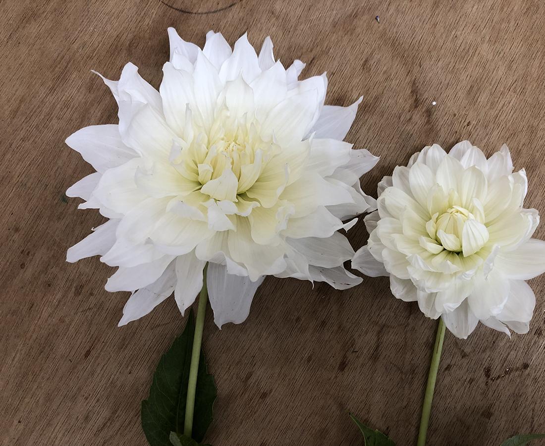 生花もビッグサイズがトレンド! 大輪の花のエネルギーで元気をもらおう。