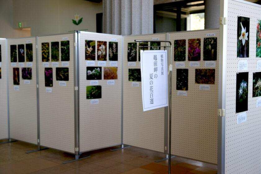 植物写真展「越前岬の夏の花百選」