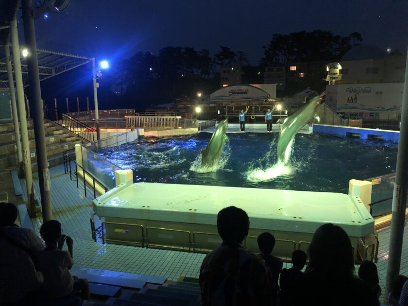 ナイター営業「夜の水族館」と ナイトイルカショー