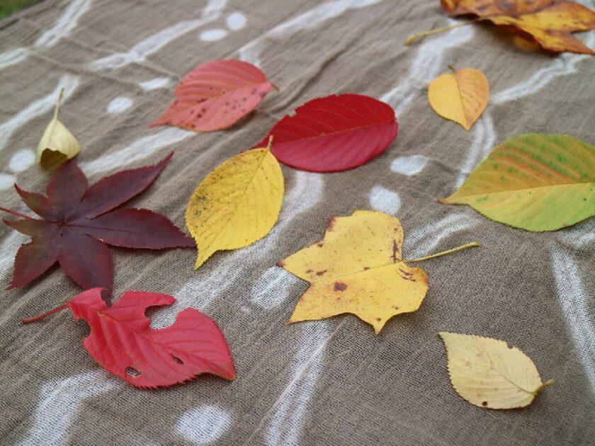 陶芸公園の「秋」を集める草木染