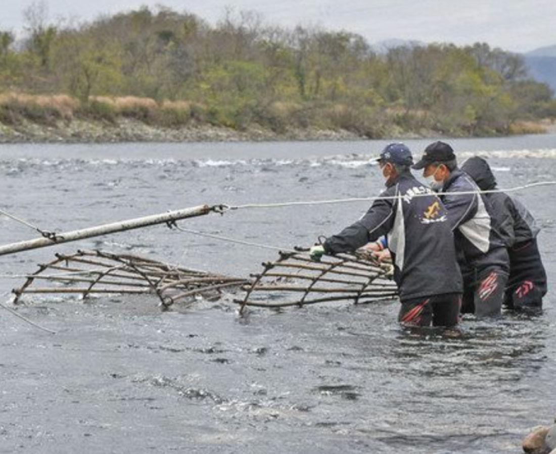 アラレガコ エバ漁で守る 永平寺町 九頭竜川で生息調査