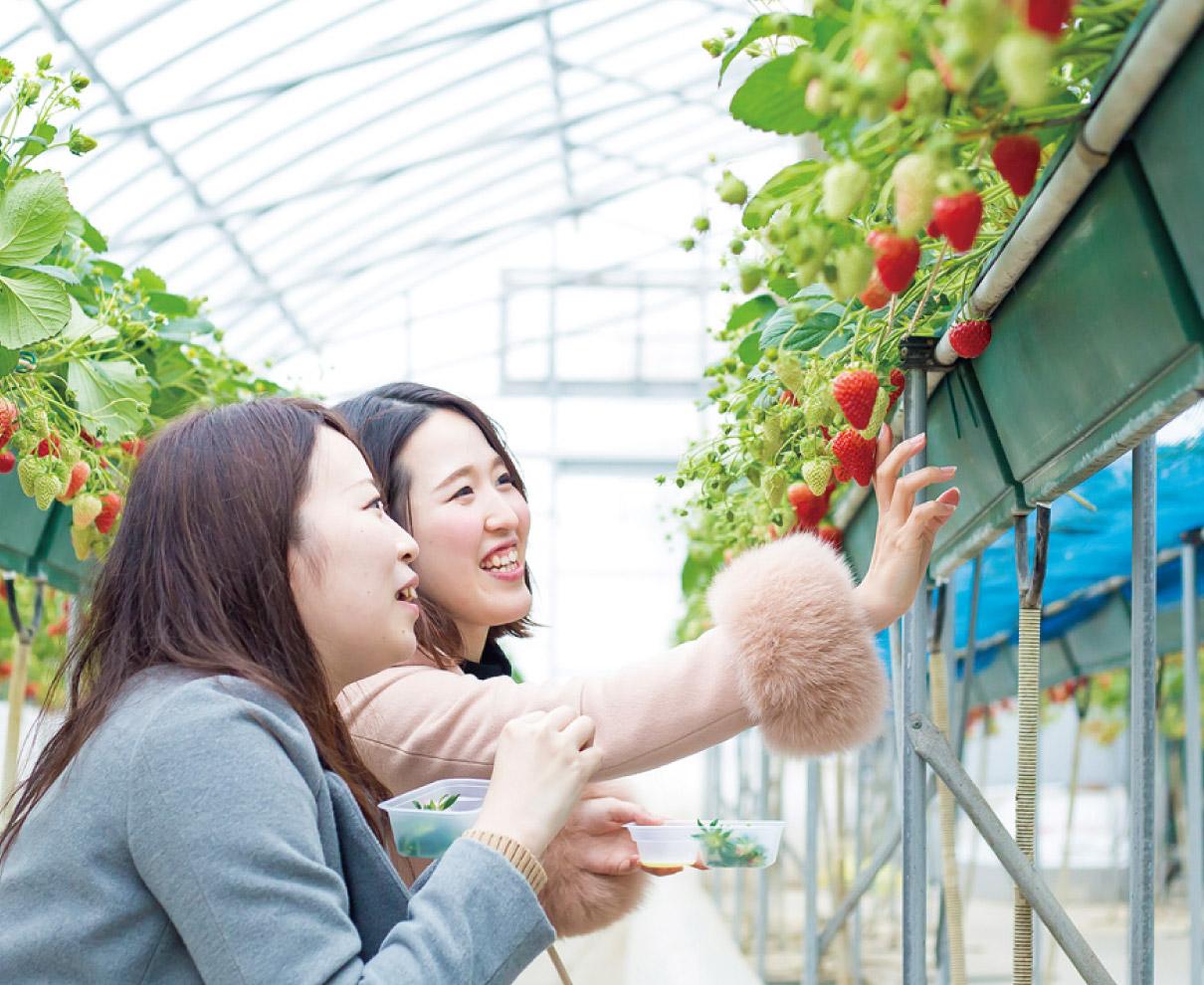 人気の観光スポット! 摘み取り専門のイチゴ園|農楽里(のらり)