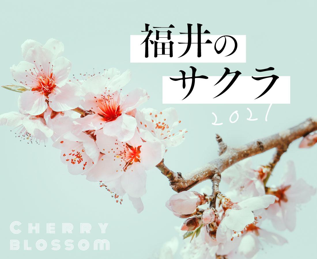 福井の桜・お花見スポット2021。桜の名所で春の訪れを感じよう!