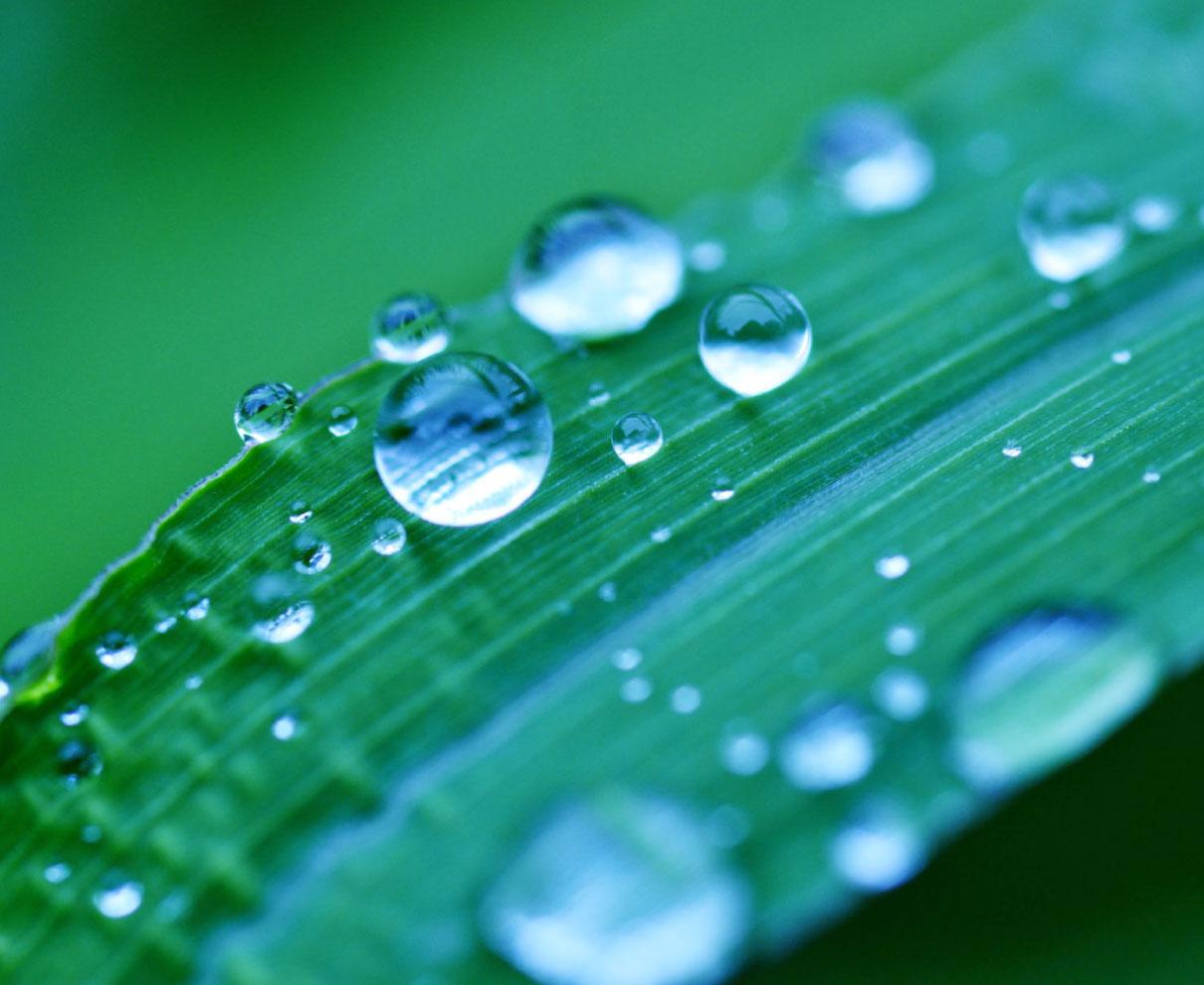 うっとうしいだけじゃない。ちょっとマニアックな雨の季節の楽しみ方を。