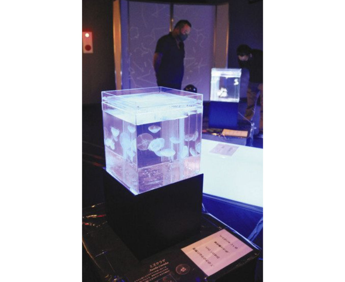 日本一短い手紙 クラゲとコラボ 丸岡で展示 癒やし空間演出