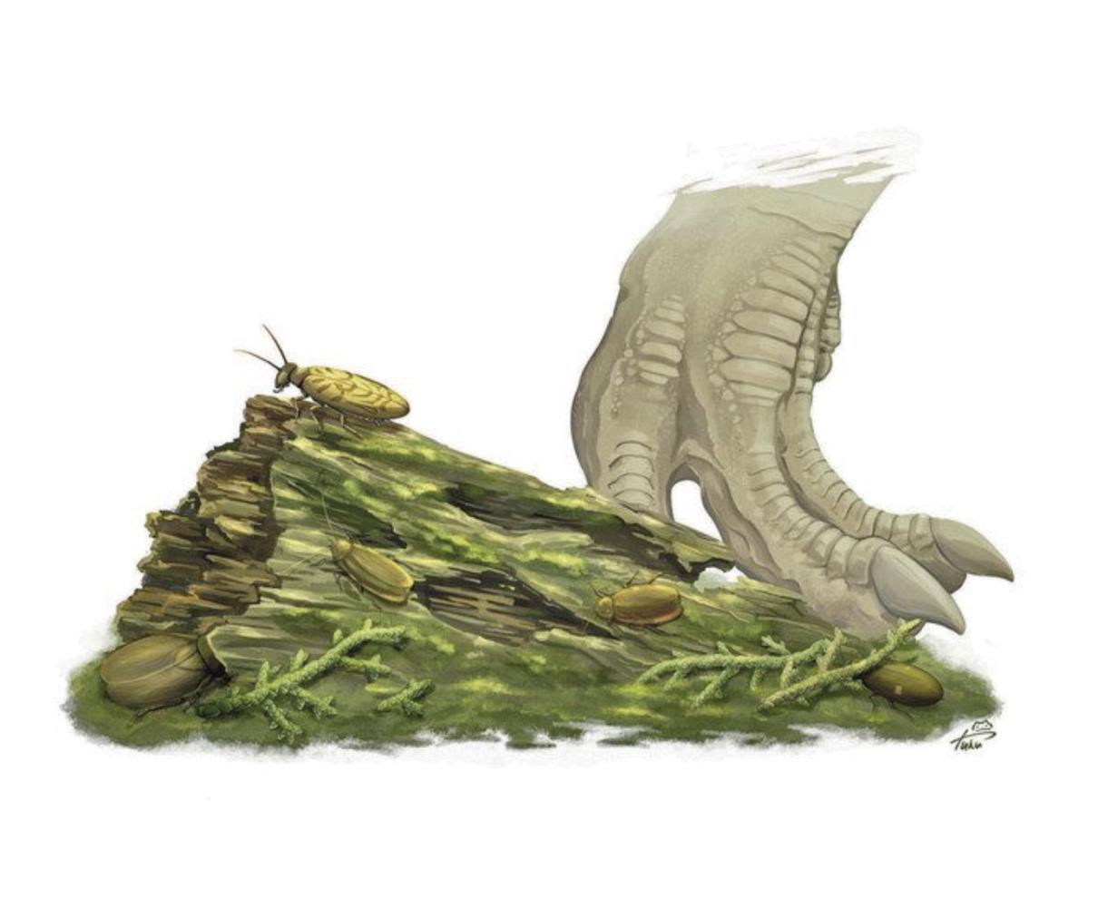 勝山で新種の化石 1億2000万年前の地層ゴキブリ3種類