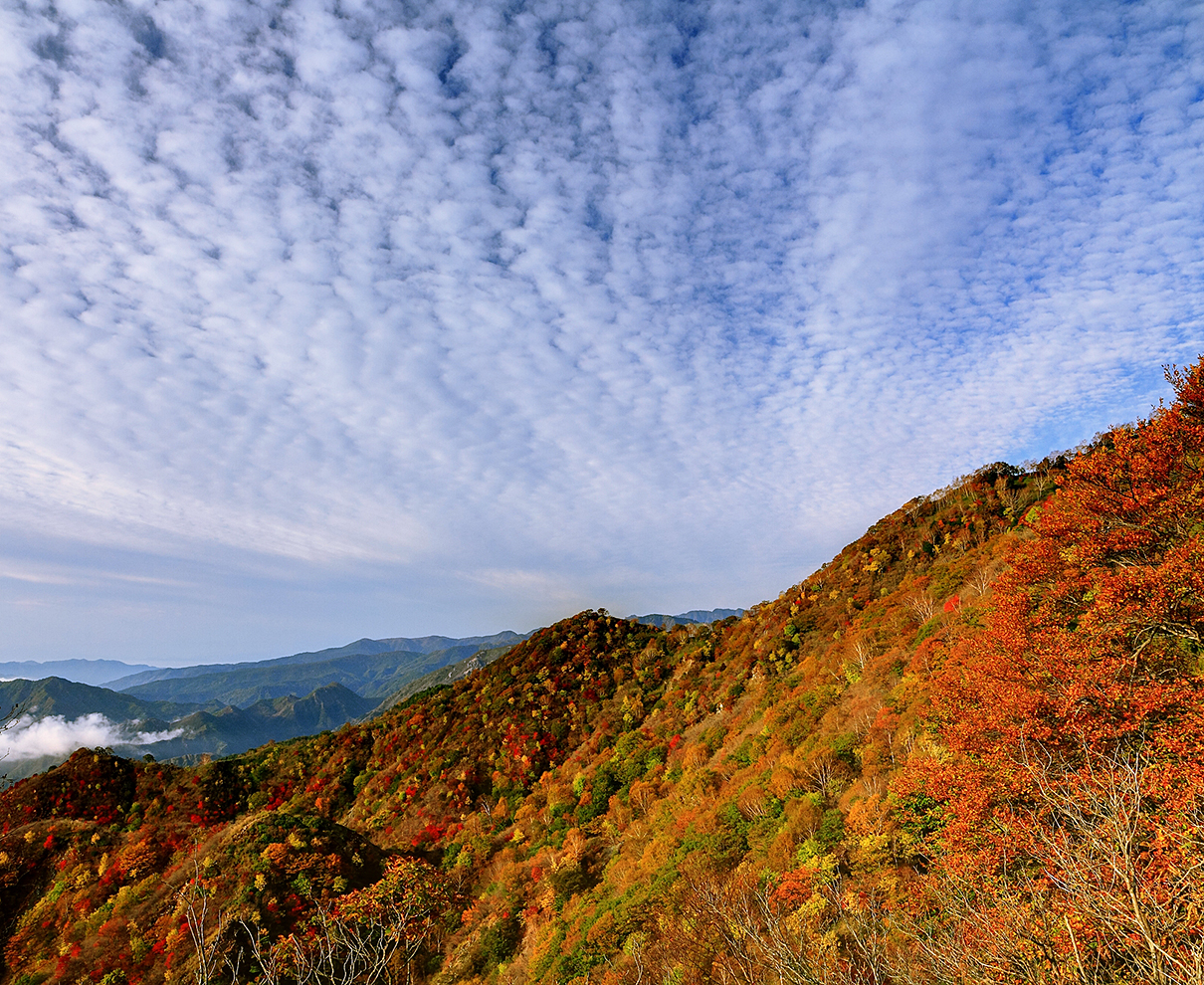「冬型の気圧配置」と耳にしたら「雲画像」を要チェック! 気象予報士 二村千津子の風と雲
