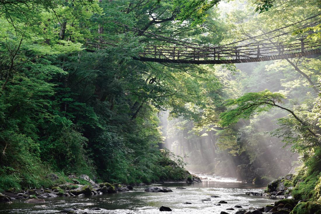 福井県池田町で楽しむ、体験&グルメ旅