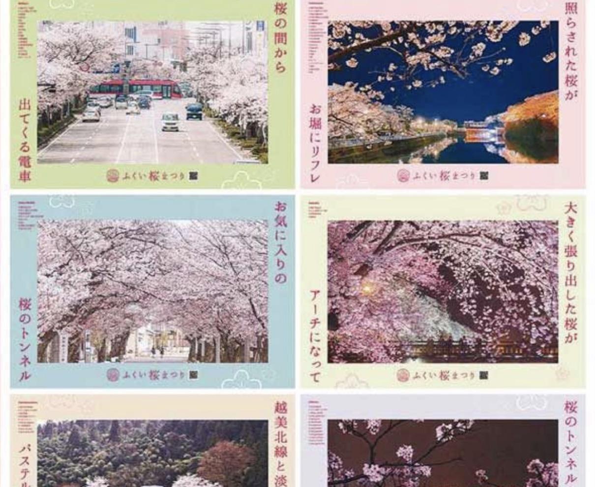 桜まつり 県外へPR強化 福井市 北陸新幹線沿線都市向け